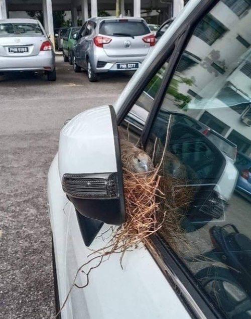 Uccellino Lillà